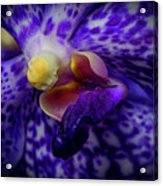 Orchid 2160tg Acrylic Print