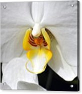 Orchid 23 Acrylic Print