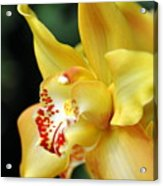 Orchid 24 Acrylic Print