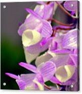 Orchid 25 Acrylic Print