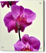 Orchid 26 Acrylic Print