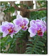 Orchid 3 Acrylic Print