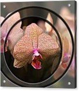 Orchid 3 Acrylic Print