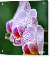 Orchid 30 Acrylic Print