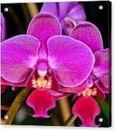 Orchid 422 Acrylic Print