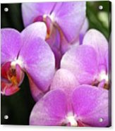 Orchid 5 Acrylic Print