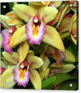 Orchid 7 Acrylic Print