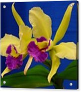 Orchid 7 Acrylic Print
