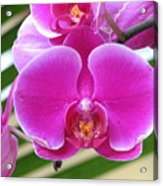 Orchid 8 Acrylic Print