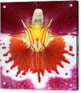 Orchid 9 Acrylic Print