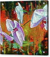 Orchid A Acrylic Print