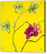 Orchid And Amarillo Acrylic Print