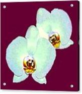 Orchid Art 5 Purple Zurich 2000 Jgibney The Museum Zazzle Gifts Acrylic Print