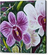 Orchid At Aos 2010 Acrylic Print