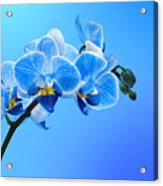 Orchid Blue Acrylic Print