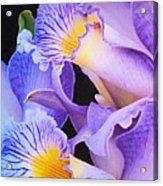 Orchid Bouquet Acrylic Print