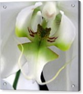 Orchid Dance Acrylic Print