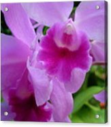 Orchid Deep Acrylic Print