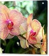 Orchid Delight Acrylic Print