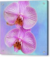 Orchid Delight - Two Blooms Against A Rainbow Background Acrylic Print