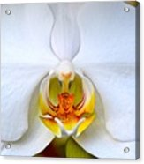 Orchid Fire Acrylic Print