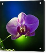 Orchid Flower On Black Background Acrylic Print