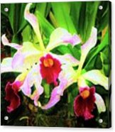 Orchid Flowers Color 1 Acrylic Print