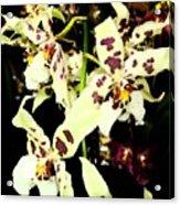 Orchid Fresco Acrylic Print