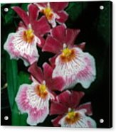 Orchid Group Acrylic Print