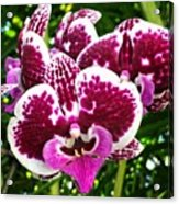 Orchid Hanging In Palms Acrylic Print