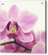 orchid III Acrylic Print