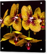 Orchid In Space Acrylic Print