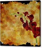 Orchid Interplay Acrylic Print