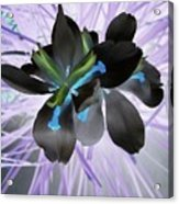 Orchid Inverted Acrylic Print