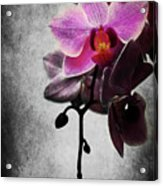 orchid IV Acrylic Print