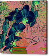 Orchid Japanaise Acrylic Print