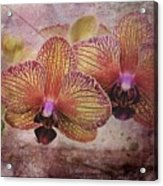 Orchid Layers Acrylic Print