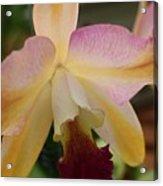 Orchid Light Acrylic Print