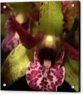 Orchid Lights Acrylic Print