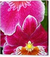 Orchid Love Acrylic Print
