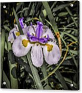 Orchid Magic Acrylic Print