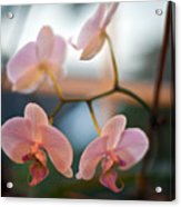 Orchid Menage Acrylic Print