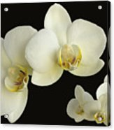 Orchid Montage Acrylic Print