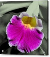 Orchid Of A Different Color Acrylic Print