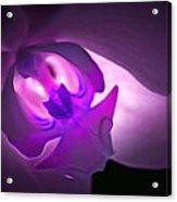 Orchid Of Fantasy Acrylic Print
