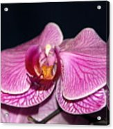 Orchid Orchid Acrylic Print