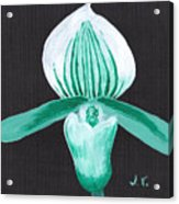 Orchid-paphiopedilum Bob Nagel Acrylic Print by M Valeriano