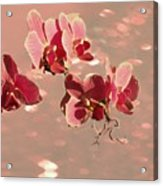 Orchid Petals In Pink Acrylic Print