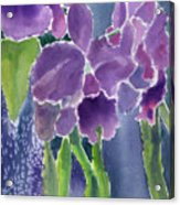 Orchid Rain Acrylic Print