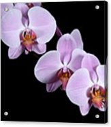 Pink Orchid I Acrylic Print